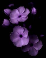 Simple beauty by Finnyanne