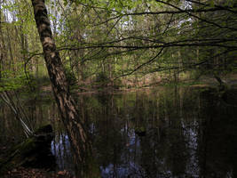Swamp Lake by Finnyanne