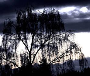 Magic Brich Tree by Finnyanne