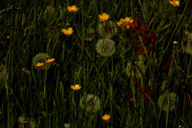 Summer meadow by Finnyanne