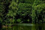Green Lake by Finnyanne