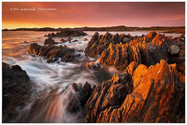 Tarkine Coast by Dee-T