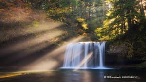 Forest Glow by Dee-T