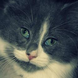Meet my new kitten. by enchanted-black-rose