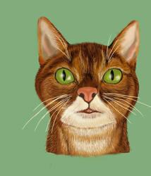 Cat by katavizi