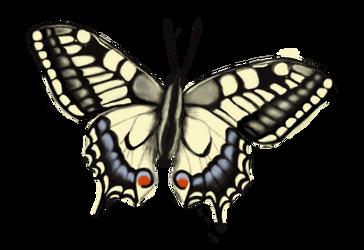 Papilio machaon by katavizi