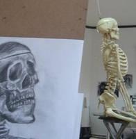 Anatomi Egitimi Ankara by Nevart-Akademi