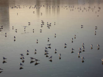Birds on a frozen lake by kaibln