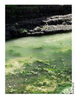 Green water by Ardnaxela