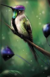 Hummingbird by Laknea