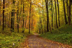 fall leads me by kopfwiesieb