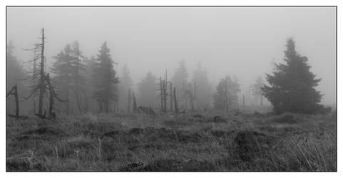 fall in fog by kopfwiesieb