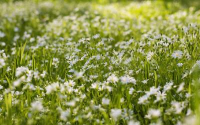 spring blooms by kopfwiesieb