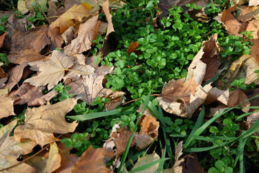 Grass and leaves by multifacetedCristall