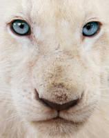 Blue Eyes by SaqqaraBird