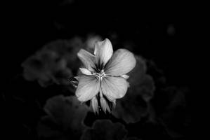 Awakening by VesnaRa014
