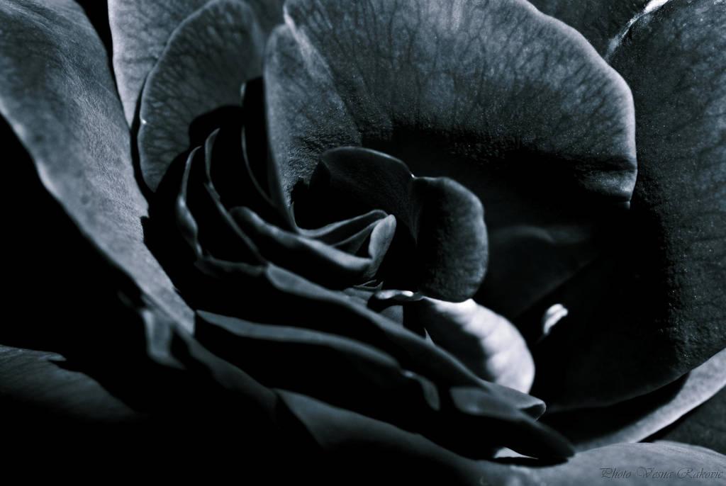 It's dark... by VesnaRa014