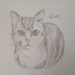 My kitty by MARJAloveHAWAY