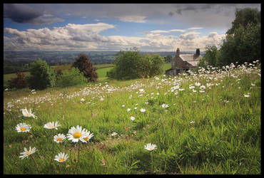 Daisy Farm by lucias-tears