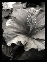 simplicity by lucias-tears