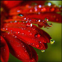 Bejewelled. by lucias-tears