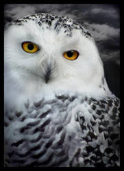 Hedwigs Return by lucias-tears