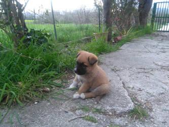 My lil' puppy Eren by carminesavastano