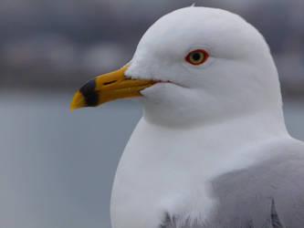 Seagull model by IceAngel1234