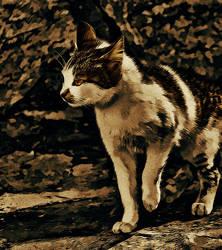 Dark Side Cat by Anutu