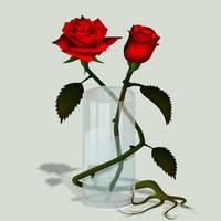 Attraction, les Roses du 25 by Furyo-kun