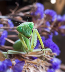 Mantis are pretty cute. by Harpyimages