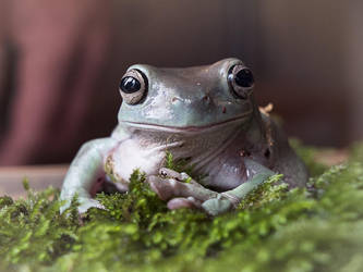Ribbit. by Harpyimages