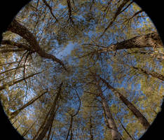 Fisheye Trees by carnedepsiquiatrico