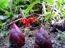 flora 003 by jitspics
