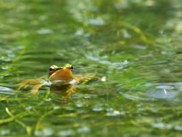 amphibian 007 by jitspics