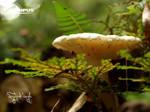 P4188209_Fungi by jitspics
