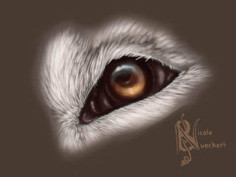 Wolf Eye Test ( FireAlpaca ) by Kuvari
