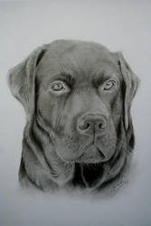 dog drawings by chris108