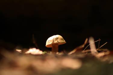 Mush Mush Mushroom I say by EJT-Studios