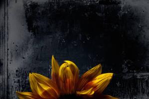 rising sunflower by tea