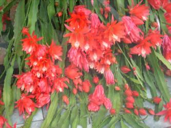 so much flowered by ingeline-art