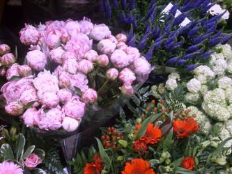 Flowermarket Amsterdam flowers by ingeline-art