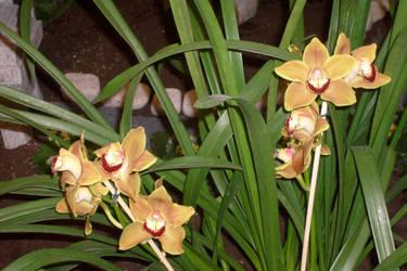 wonderful yellow orchid by ingeline-art