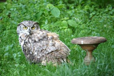 owl in castle garden 2 by ingeline-art