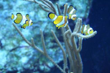 happy clownfishes 2 by ingeline-art
