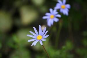 flowers in Flora garden 36 by ingeline-art