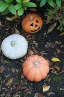 pumpkin decoration in my garden by ingeline-art