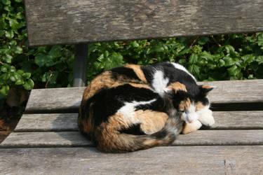 lazy cat by ingeline-art