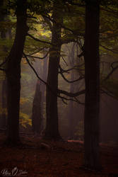 Dream of autumn @ Crovuri by Pod-Photography