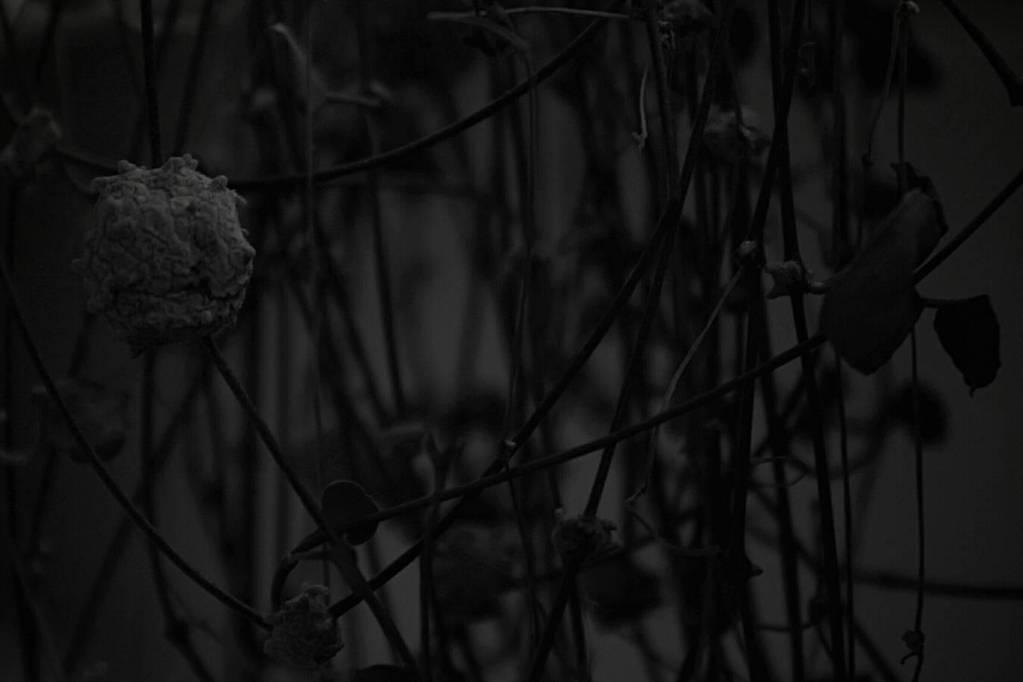 dark by 8CrazyWorld8